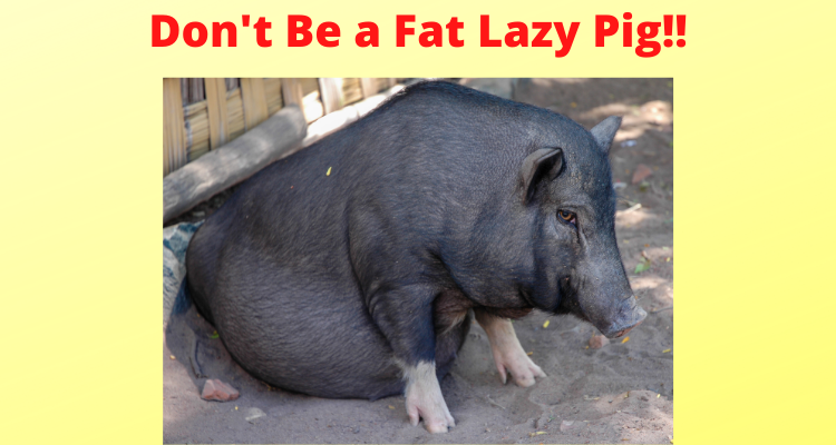 Don't Be A Lazy Fat Pig – Workout Anywhere!!